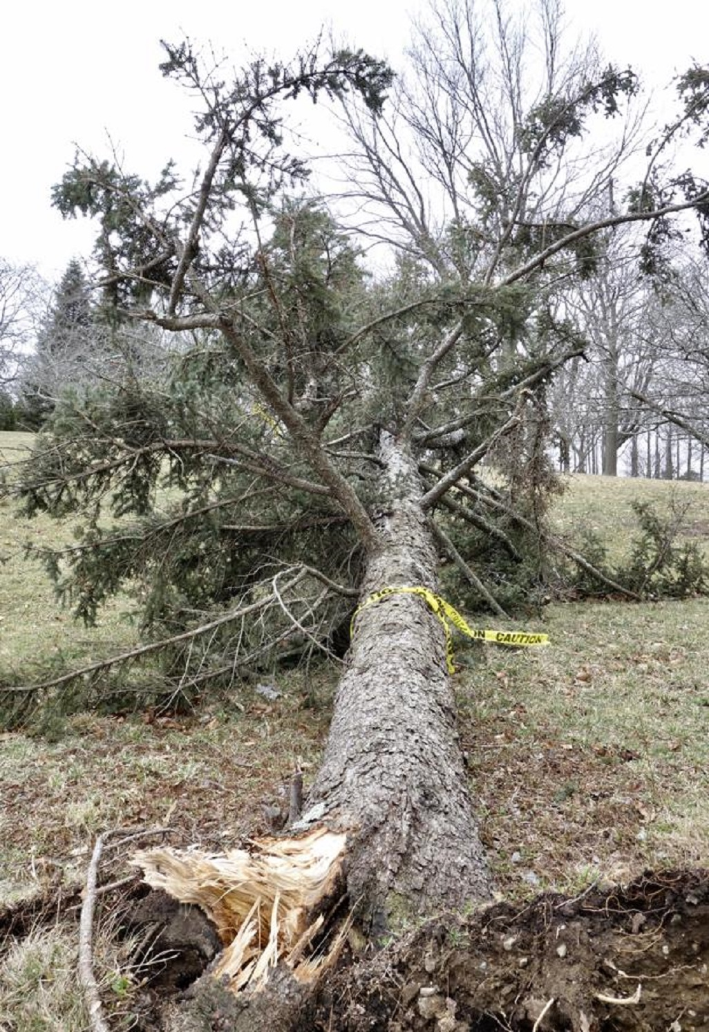 Ask the Gardener: Outfox Mother Nature with these storm-tested trees