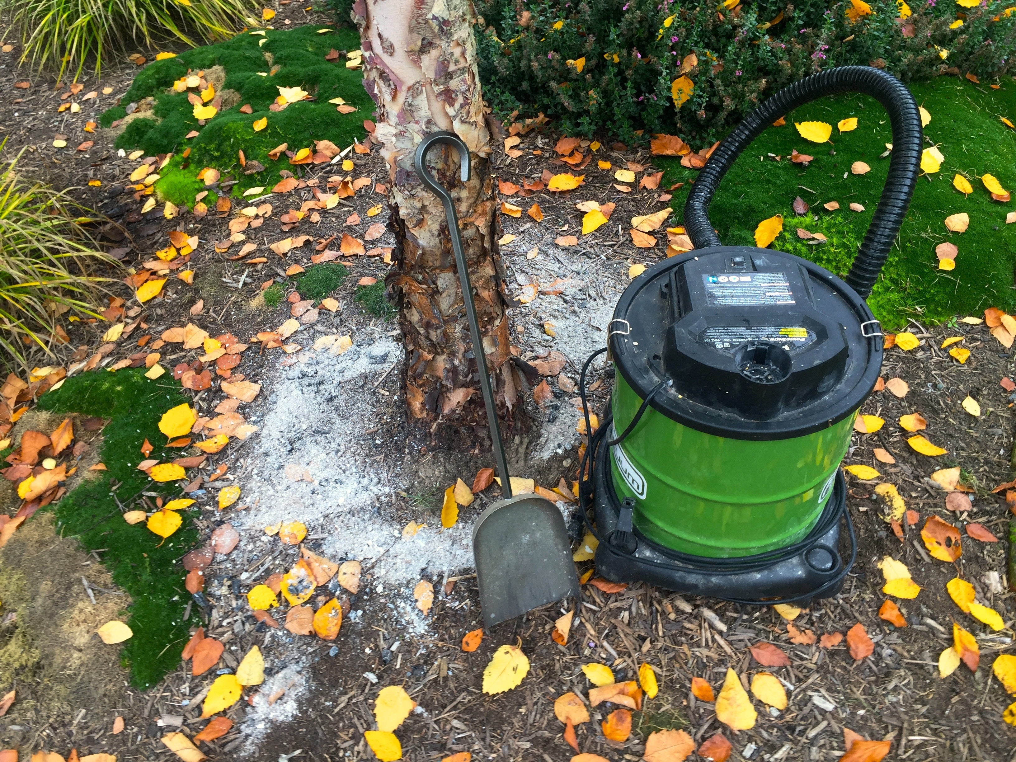 Wood ash from fireplaces can enrich garden soil. Here's how.