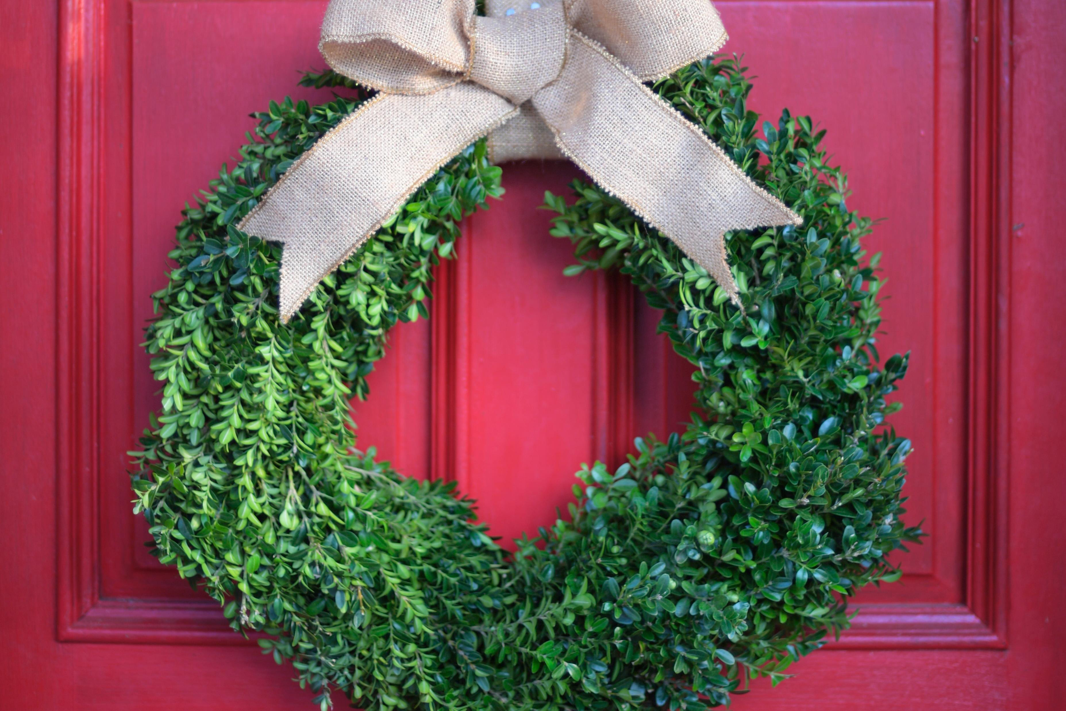 Before decking the halls with boxwood, be aware of this disease